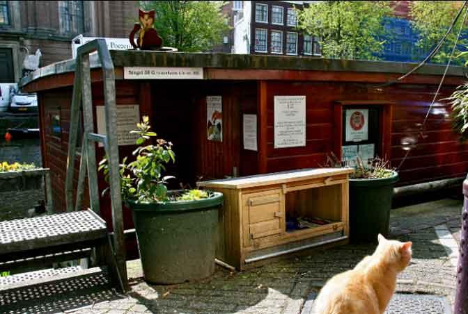 The cat boat