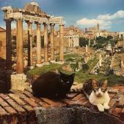 Rome, ville des chats