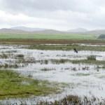 Bird reserve on Islay