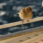 Vogeltje, our little stowaway