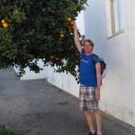 Ivar picking fresh oranges