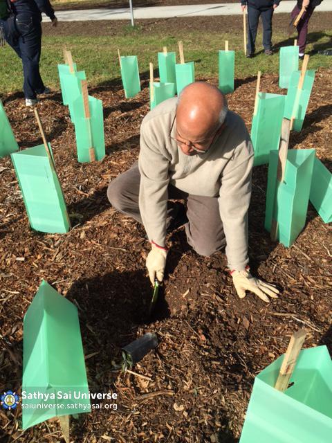 Australia - South Australia - Tree Planting 01 copy