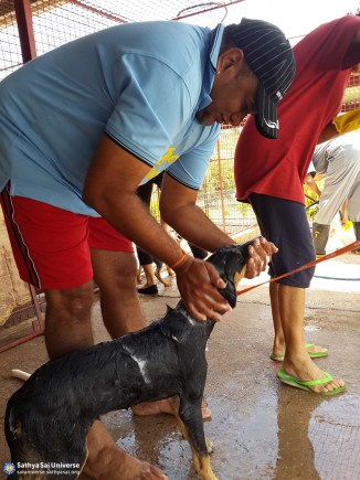 animal-seva-2-trinidad-copy