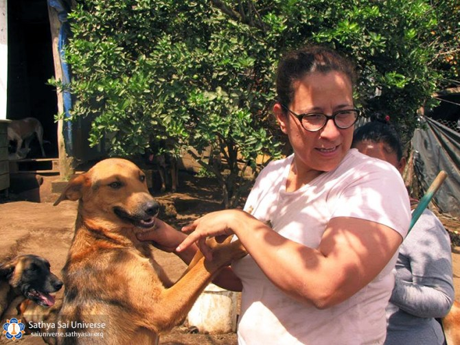 guatemala-service-to-animals-2017-perros6