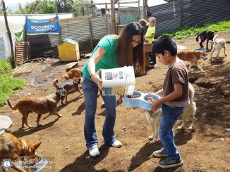 guatemala-service-to-animals-2017-perros8