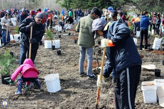 canada-tree-planitng-june-2017-tree3