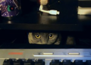 a cat protecting the keyboard