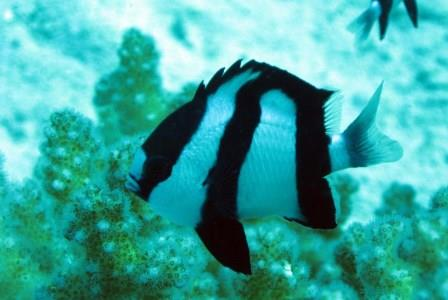 5 starter fish every saltwater hobbyist should avoid for Good beginner fish