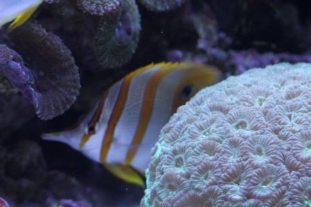 Aquarium water parameters for a reef tank