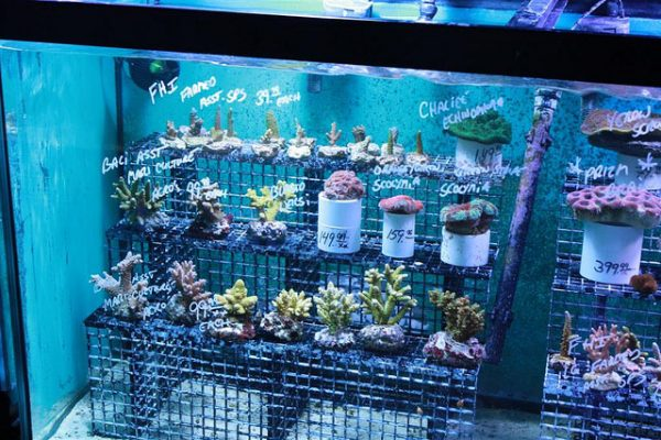 How to choose a local fish store saltwater aquarium blog for Local fish stores
