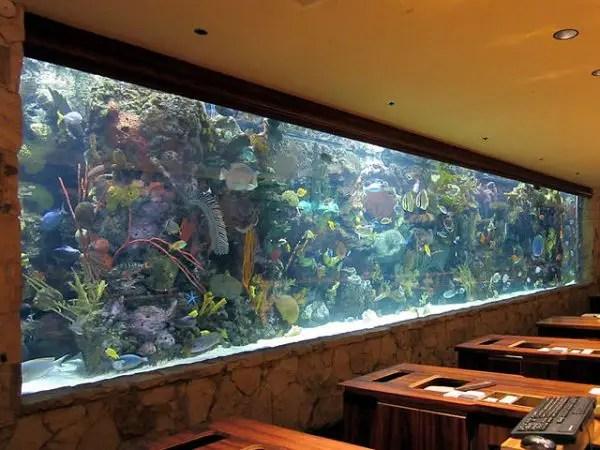 success fragging corals