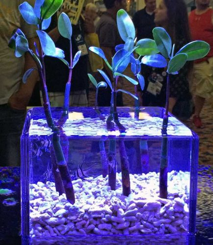 mangrove reef tank