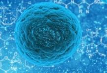 cellula-staminale