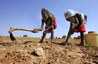 Un projet d'amélioration des rendements agricoles lancé à Kaolack