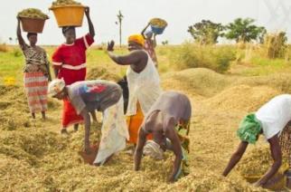 Au Sénégal, les femmes ne détiennent que 13% des terres agricoles