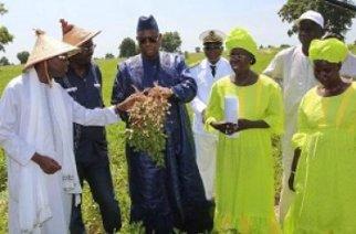Soutien à l'agriculture : des femmes saluent la discrimination positive du président Sall