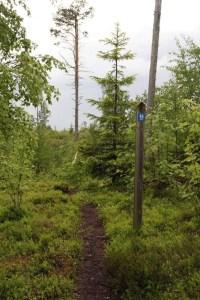 Leveää ja nopeaa baanaa kainuulaisittain. Kuva: Vuokatti Trail Challenge
