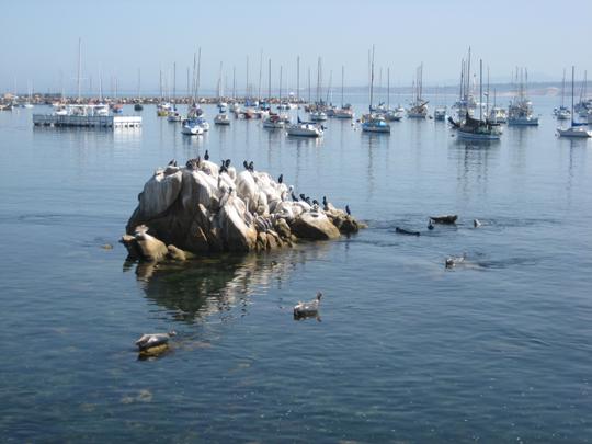 Monterey Bay animals