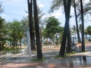 Phuket Trees