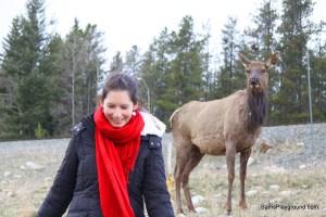 Jasper National Park & Town