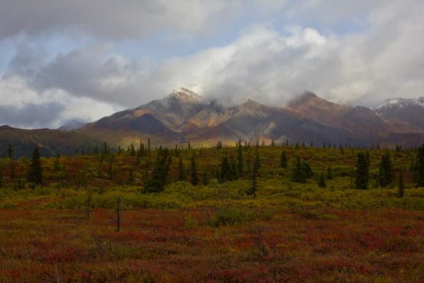 Denali National Park red tundra