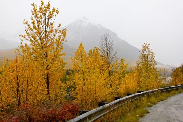 Autumn foliage and foggy views
