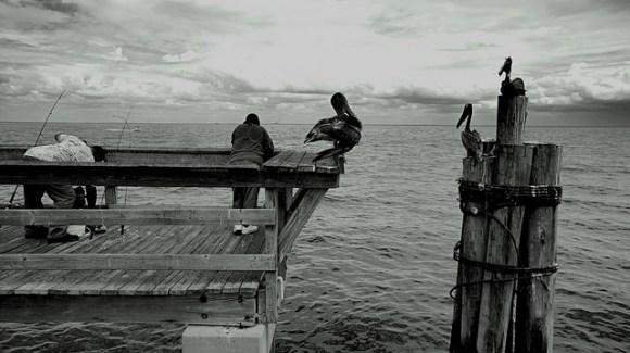 Birds & fisherman on Florida wharf fishing