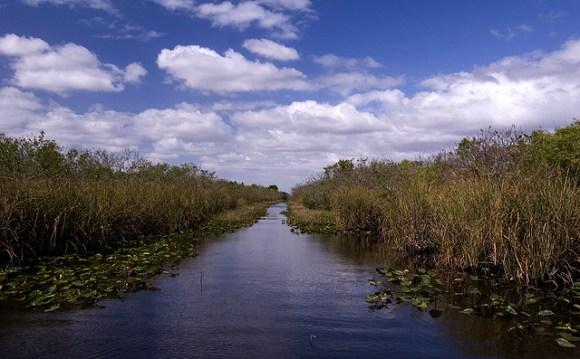 Photo of The Florida Everglades