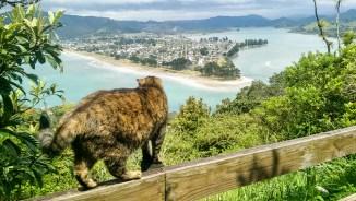 Mount Paku - local cat guide