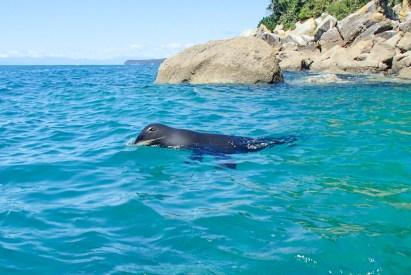 Seal at Tonga Island