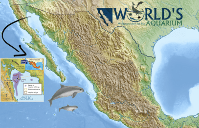 Vaquita Graphic1 smaller