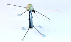 Robotic fly with pyramidal onboard sensor on top