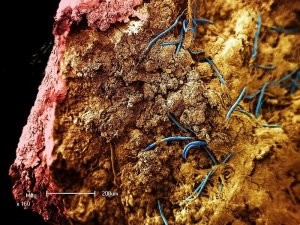 Nematodes (blue) wiggle inside a stalactite from a South African gold mine in this image taken with an electron microscope. (Credit: Gaetan Borgonie)
