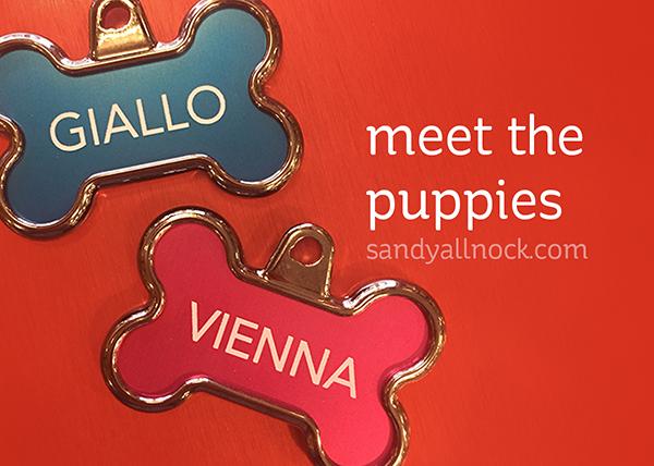 meet-the-puppies