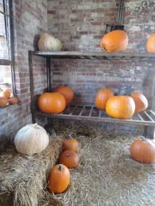 pumpkins-in-jailhouse