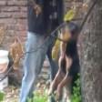 Un hombre ahorcó a su propio perro mientras otro filmó la escena