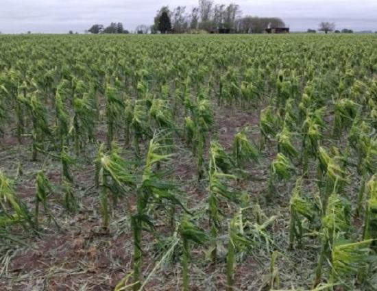 El granizo destruyó cultivos en campos de la región