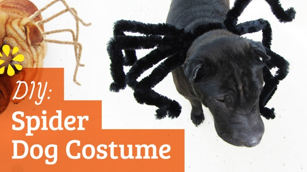 SeaLemonDIY DogCostume