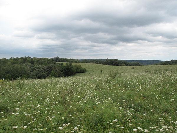 fieldqueenanneslace1