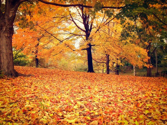 Central Park - Autumn - New York City