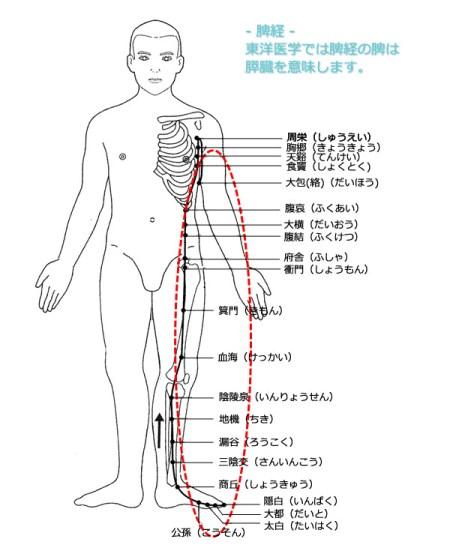 皿まわしエクササイズは脾経を刺激して、膵臓のインスリン生成を安定させます。