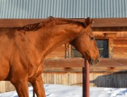 winter fire safety horse farm
