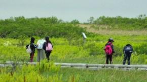 【報告】初夏の木道散策