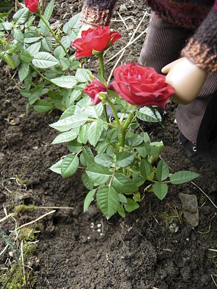 Gardening 31