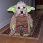 Funny Halloween Dog Costumes Pictures