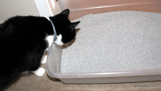 #shop How To Keep Your Litter Box Smelling Fresh