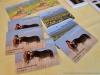 К созданию Центра реинтродукции лошади Пржевальского в Оренбургском заповеднике, 2016. Фото Н. Судец