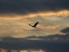 Степной орёл. Оренбургская область. Фото И. Карякина