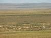 Дзерены. Даурский заповедник, Забайкальский край. Фото А.Н. Барашковой