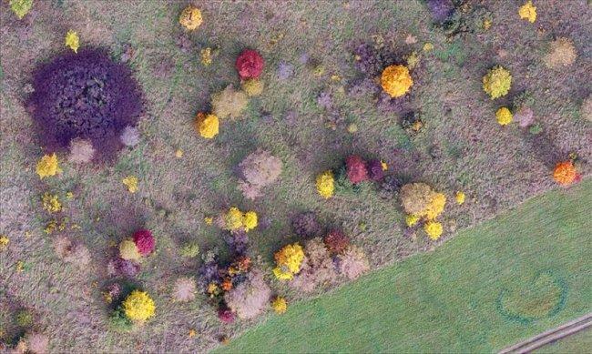 Фрагмент осеннего аэрофотоснимка. Cъёмка с высоты 150 м, Центрально-Черноземный заповедник. Фото Д.О. Рыжкова